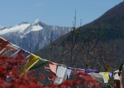 Flags-Panorama