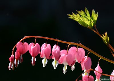 Blume_3