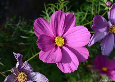 Blume_7