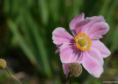 Blume_8