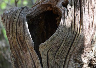 Holz_1