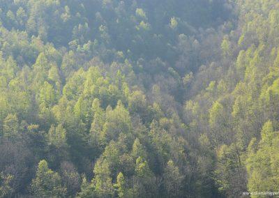 Wald_3
