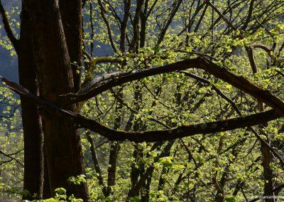 Wald_4