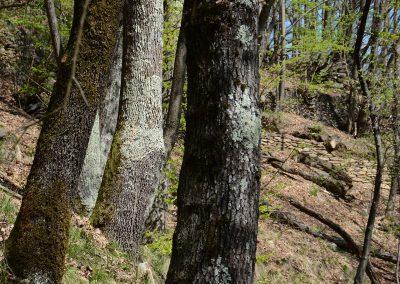 Wald_6