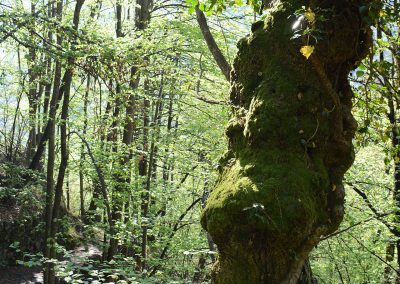 Wald_7