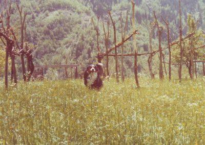 Dorfhund Xerxes